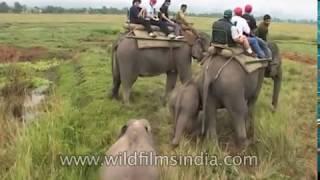 Elephant Safari at Kaziranga National Park, Assam