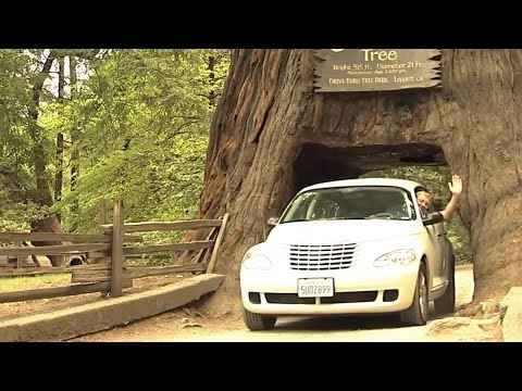 California's Redwood Coast