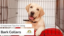 6 Tips for Anti Bark Collars for Dogs