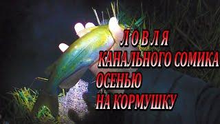 Рыбалка На Реке Осенью Канальный Сомик На Пружины Манно Гороховая Мастырка в Деле Catfish