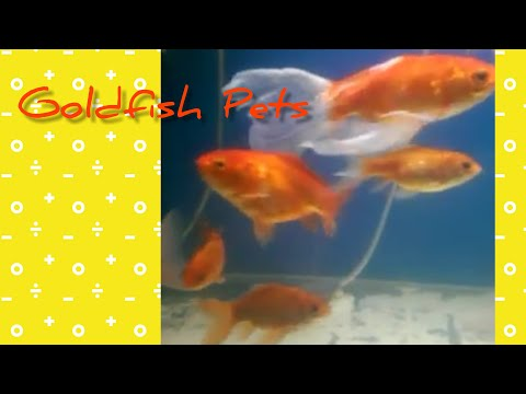 Are These Of Common Goldfish Type? F001