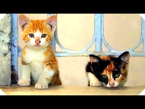 KEDI (2017) Best Cats Documentary Movie of the Year