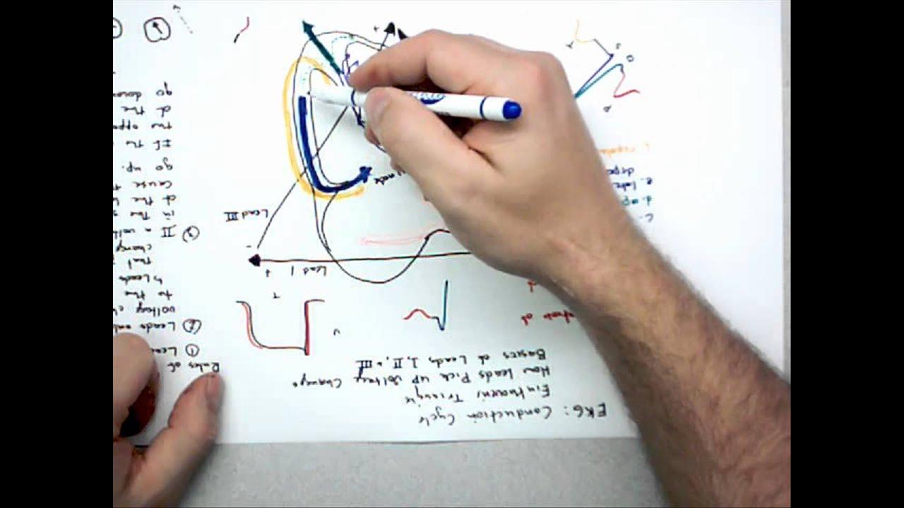 medium resolution of 12 lead ecg basics