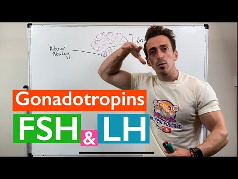 Gonadotropins   Follicle Stimulating Hormone (FSH) and Luteinizing Hormone (LH)