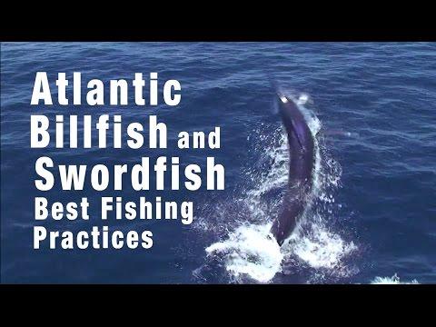 Atlantic Billfish And Swordfish: Best Fishing Practices