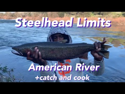 Steelhead Limits On The American River 2020
