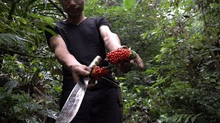 Trapping birds with forest fruits, episode 6, survival in the forest