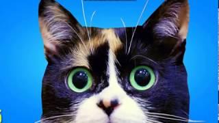 Кошка Куки под песню:круче всех
