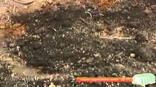 Хвойные растения - посадка и уход(Строительный портал http://donosvita.org представляет видео о хвойных растениях и уходу за ними., 2012-04-10T02:51:59.000Z)