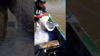Ловля кеты сплавными сетями Достаем улов из реки Амур