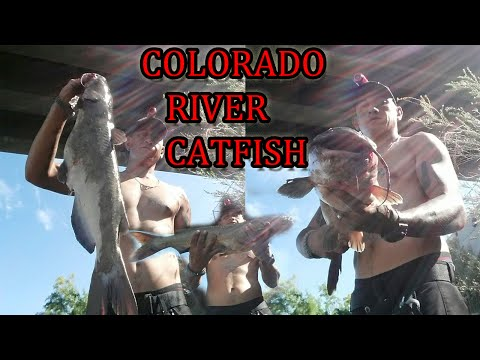 BIG CHANNEL CATFISH CAUGHT IN COLORADO RIVER from YouTube · High Definition · Duration:  9 minutes 39 seconds  · 1,000+ views · uploaded on 7/30/2015 · uploaded by MR-FLIP