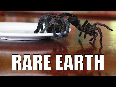 Eating Spiders to Stay Alive