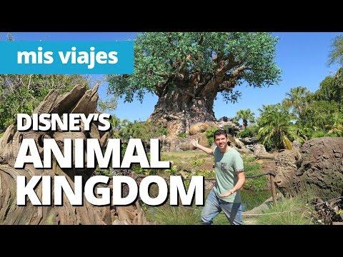 El parque Disney más grande del mundo | ANIMAL KINGDOM