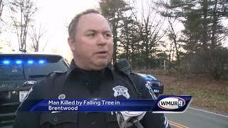 Man killed by fallen tree in Brentwood