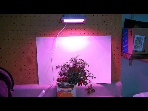 Testing The ACKE 24watt LED Grow Light For Cloning And Ripening Tomatoes.