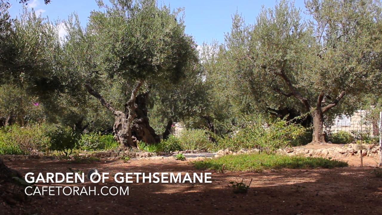 Garden of Gethsemane, Jardim do Getsêmani, Jerusalem - YouTube