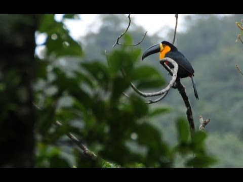 Global Seminar: Conservation Biology & Practice in Brazil's Atlantic Forest