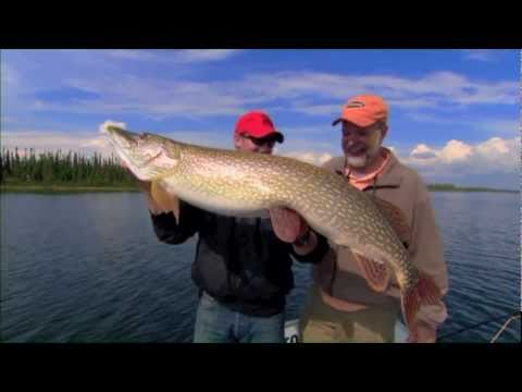 Monster Pike on the fly at Wollaston Lake Lodge