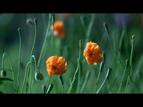 @PAHADI MITRA ALARM TUNE VIDEO RINGTONE VIDEO