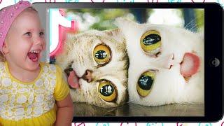 Смешные кошки 2021 и другие животные 10 минут смеха Смешные животные 2021 Лучшие приколы с котами