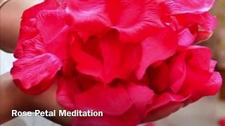 Rose Petal Meditation