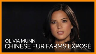 Olivia Munn Exposes Never-Before-Seen Footage on Chinese Fur Farms