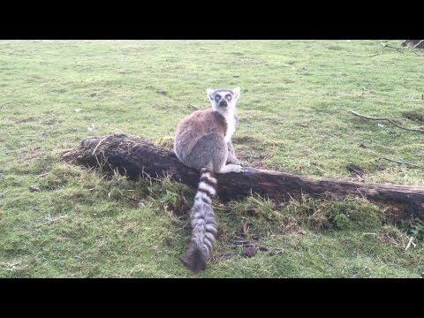 Blackpool Zoo Tour 2017