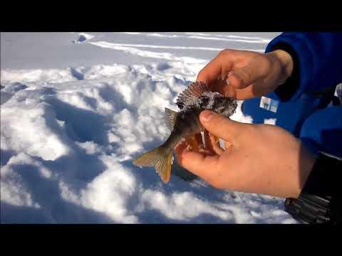 зимняя рыбалка видео - 2018-03-06 13:22:29