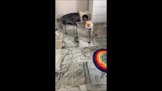 Sweet Dog Couldn't Figure the Way Around the Open Fence