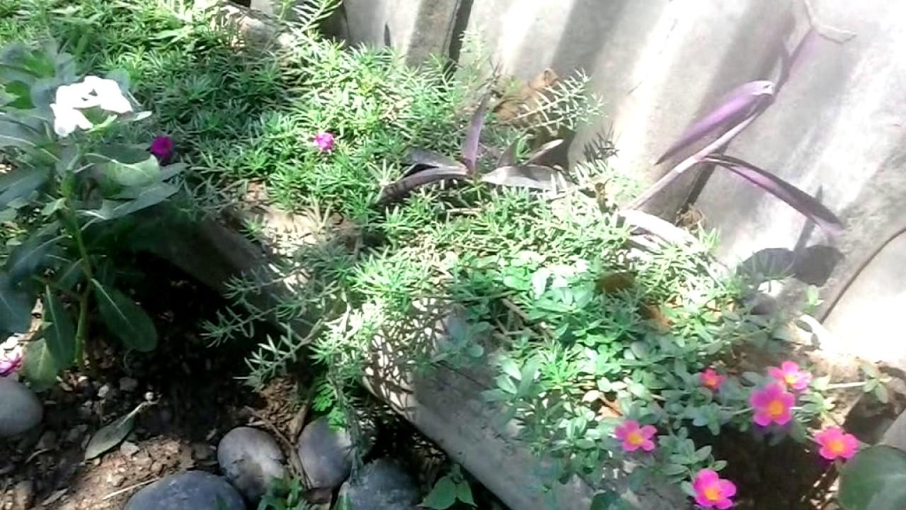 Jardinera rustica barias plantas de sol youtube Plantas de sol directo para jardin