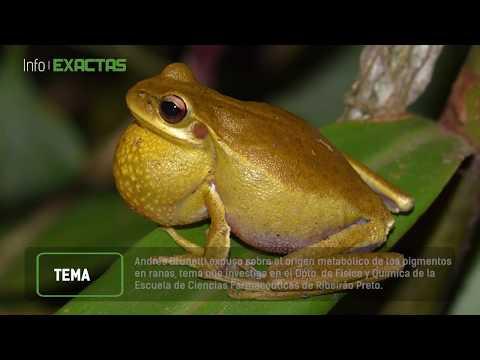 Olores, colores y sonidos: comunicación en anfibios