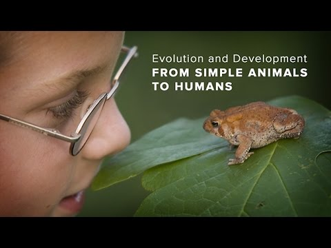 Evolution and Development from Simple Animals to Humans via Ancestral Gene Networks