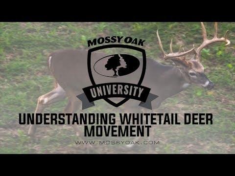 Understanding Deer Movement