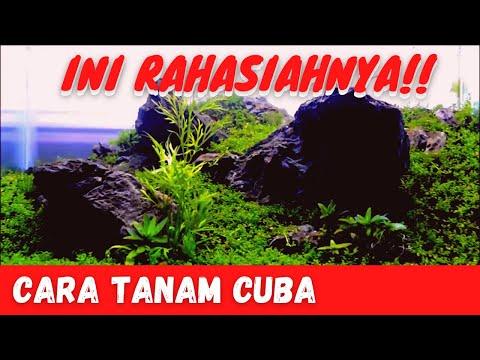 CUBA PART 1 # Step By Step Planting # Aquascape