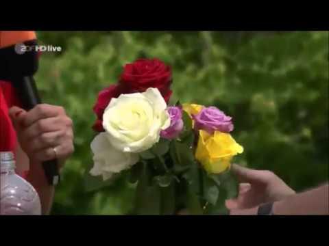 ZDF-Fernsehgarten: Rosen über Stecklinge vermehren und Zugabe von Weidenwasser zur Wurzelbildung