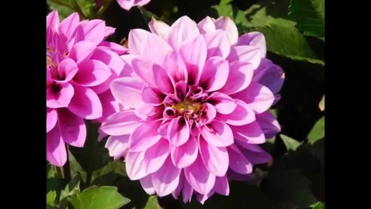 flores bonitas de jardin con sus nombres youtube
