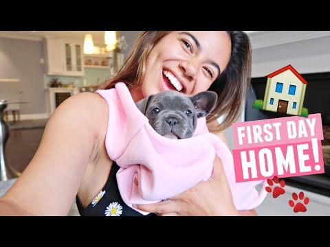 PUPPY'S FIRST DAY HOME!🐾🏠