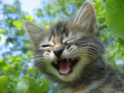 Кот под кайфом))) Прикол!