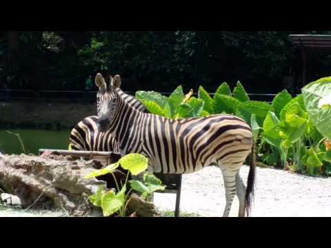 Zoo Taiping 2013 太平动物园 (4K video)