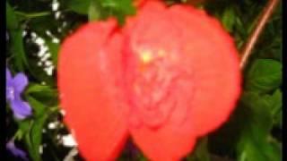 Fruta Madura - Pernett