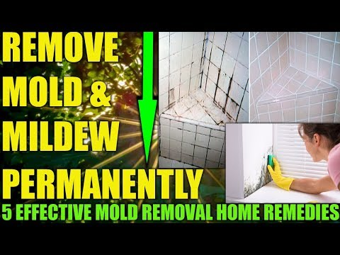 how-to-get-rid-of-mold-&-mildew-on-walls-permanently---remove-mold-from-bathroom-shower-tiles-now