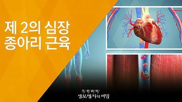 제 2의 심장 종아리 근육 - (20180829_660회 방송) 내 다리가 아픈 이유, 종아리를 주목하라