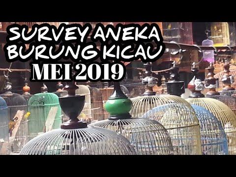 Survey Harga Aneka Burung Kicau, Mei 2019