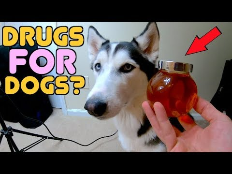 which-medicines-are-safe-for-your-pets?-(cbd-oil-review)