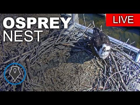 Richmond Osprey Cam - Presented by Friends of the James River Park