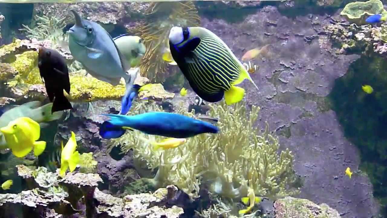 zoo wilhelma stuttgart aquarium 2011 1 youtube. Black Bedroom Furniture Sets. Home Design Ideas