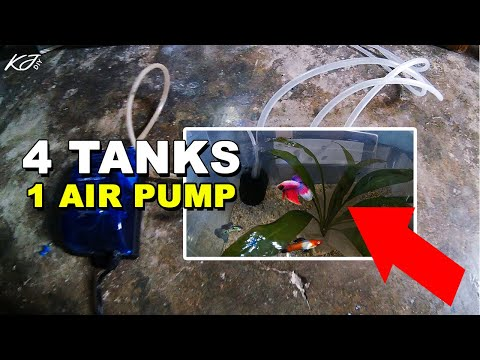 1 AIR PUMP Set Up For Multiple Tanks