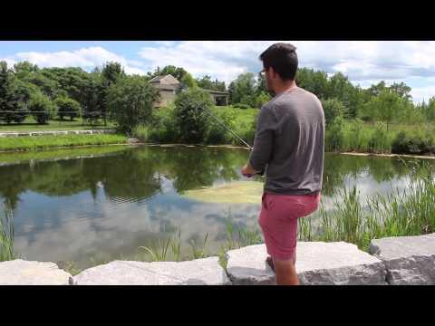 Asian Carp in Ontario