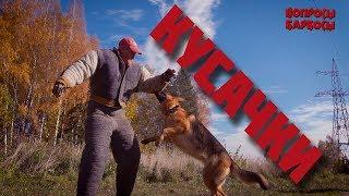 Вся правда о подготовке собак к защите хозяина и караульной службе.