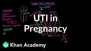 UTIs in pregnancy | Reproductive system physiology | NCLEX-RN | Khan Academy